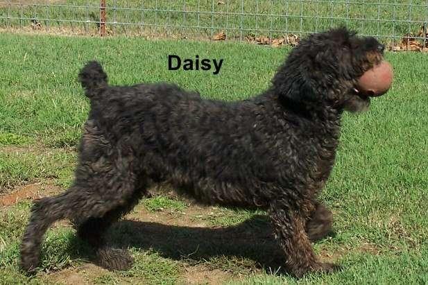 Daisy_Doo~0