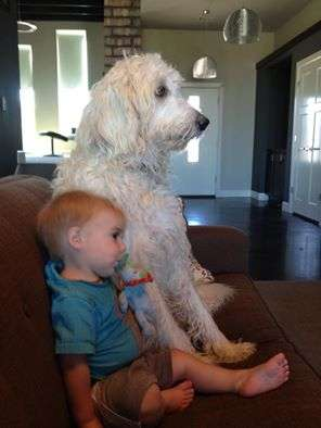 Oliver and Gus LDoodle watching TV