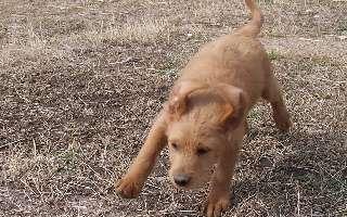 Teddy Gordon at 7 weeks