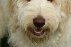 Bailey aka Handsome 1
