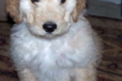 Triscuit 8 weeks